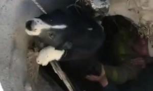 В Приамурье пожарные спасли собаку из колодца