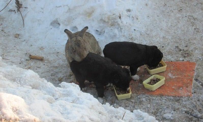 Кролик спас щенков убитой собаки и заменил им