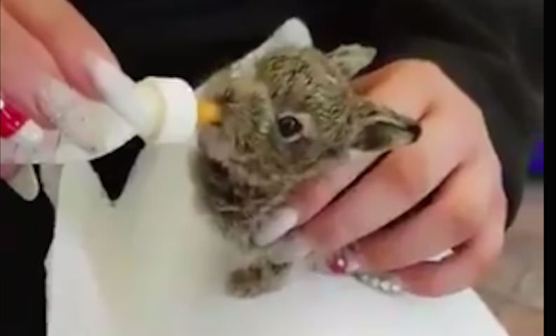 В аэропорту Дублина спасли замерзающего кролика-потеряшку и сделали знаменитым
