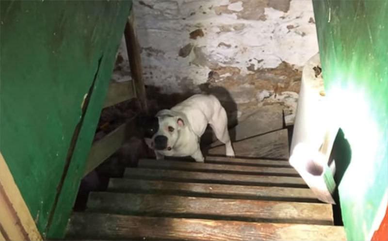 Жильцы дома спасли из подвала пса, брошенного прошлыми хозяевами