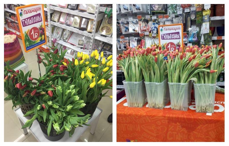 Более 500 000 тюльпанов было продано на народной акции