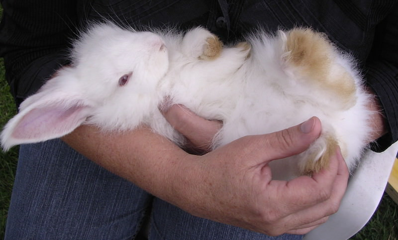 Кролики это тоже жидкость