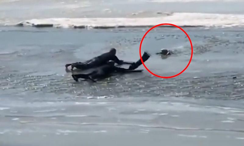 Отважные хабаровчане спасли собаку, провалившуюся под лёд на Амуре