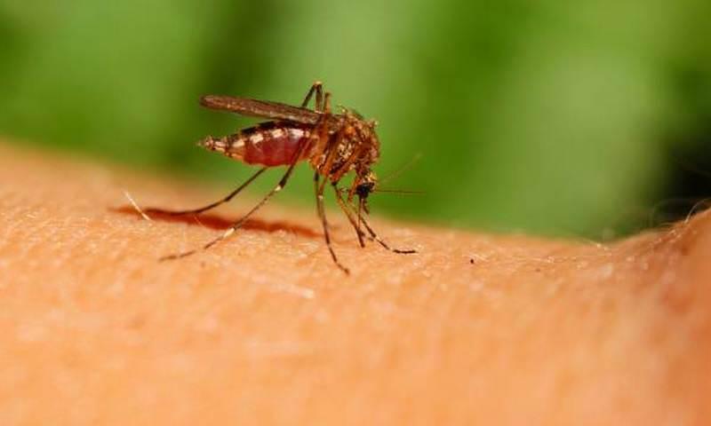 Ученые нашли таблетку, от которой гибнут комары