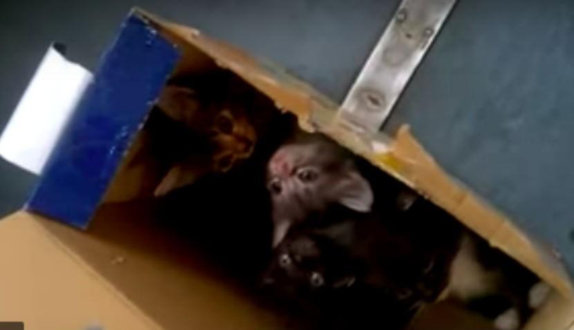 Как котята эвакуировали электричку