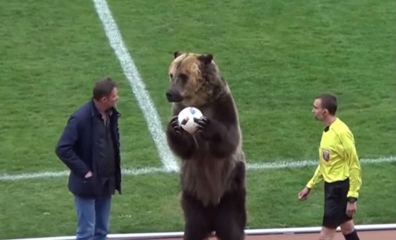 России снова досталось от США: теперь из-за медведя Тимы