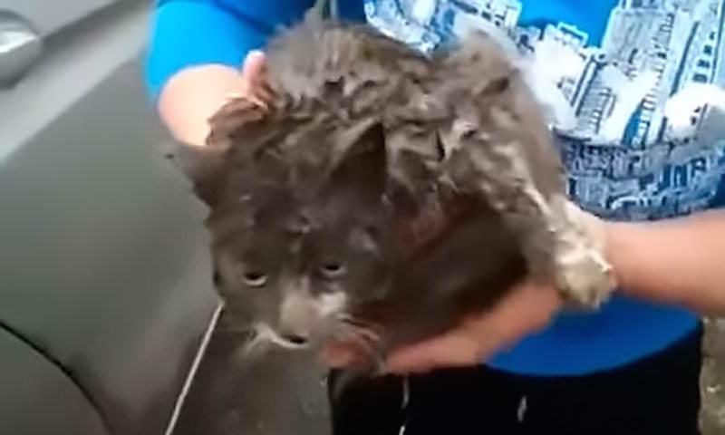 Кот чудом выжил после 130-километровой поездки в колесе машины