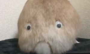 Как превратить кролика в грустного монстра?