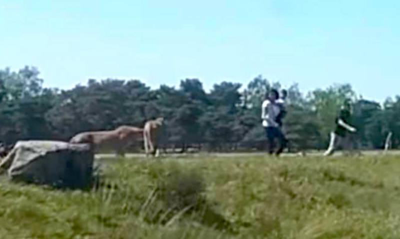 Атакованный гепардами на сафари француз бросил жену с ребенком