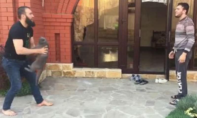 Кадыров заступился за бросавшего кота чемпиона России по самбо