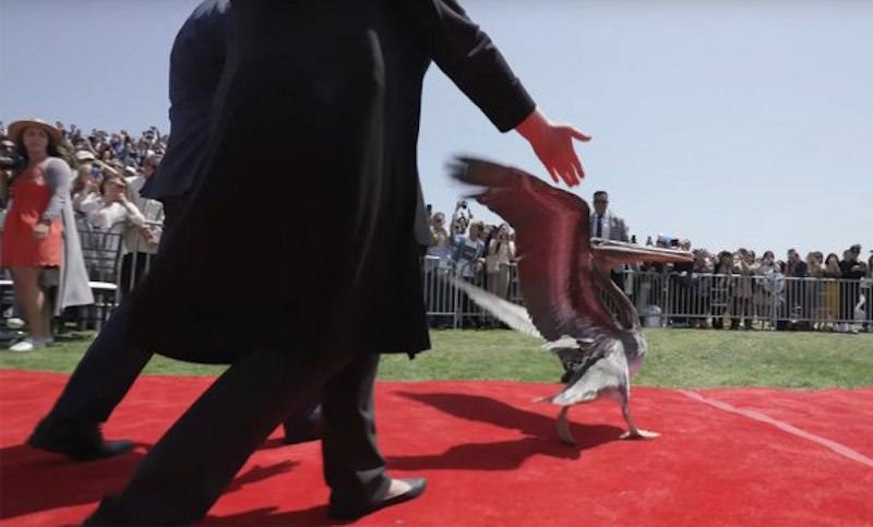 Пеликаны сорвали церемонию вручения дипломов выпускникам