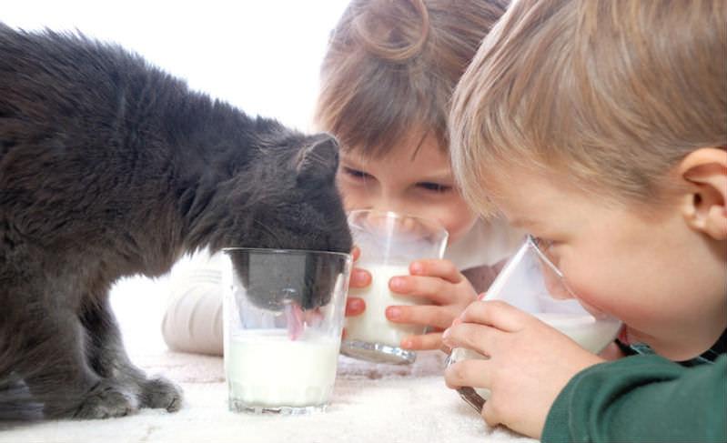 Роскачество узнало всё про жирок в молочке