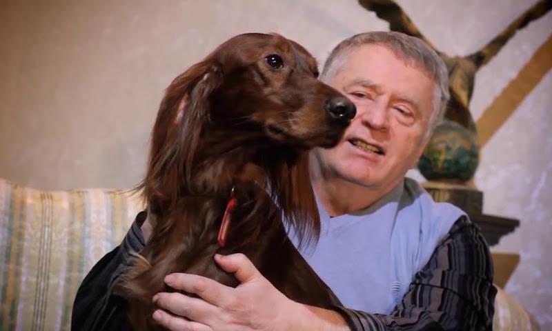 Жириновский выгоняет из ЛДПР депутатов с собаками