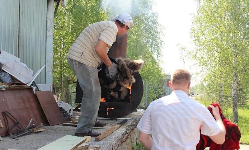 Более 50 шуб сожгли власти Томска