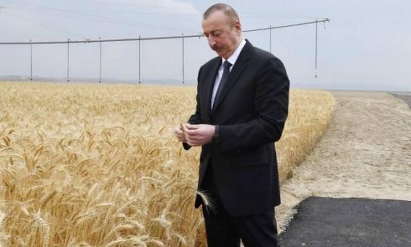 Для президента Азербайджана уложили асфальт по полю ради фото