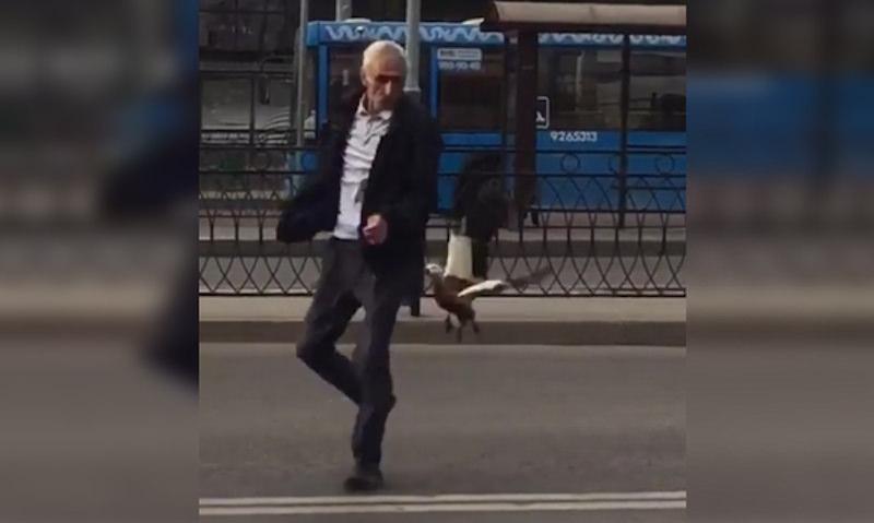 Утка избила таксиста в Москве