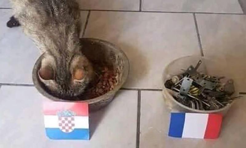 Кот предсказал победу Хорватии
