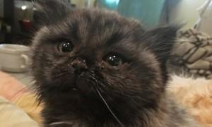 В лесу нашли необычного котенка-карлика