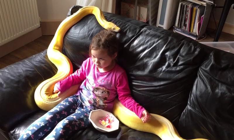 Отец снял на видео игры пятилетней дочки с огромным питоном