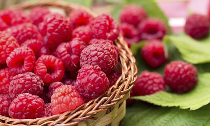 Календарь: 16 августа – День малинового варенья