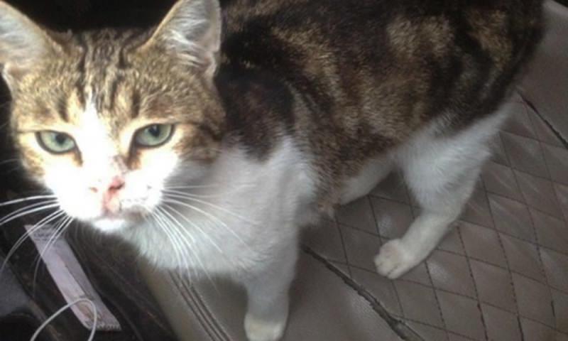 Кот попытался пронести наркотики в тульскую колонию