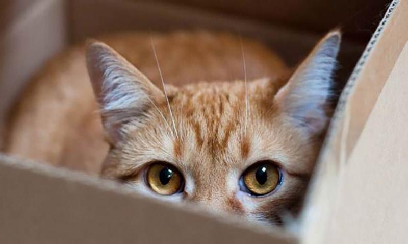 Ученые выяснили, почему котики любят картонные коробки