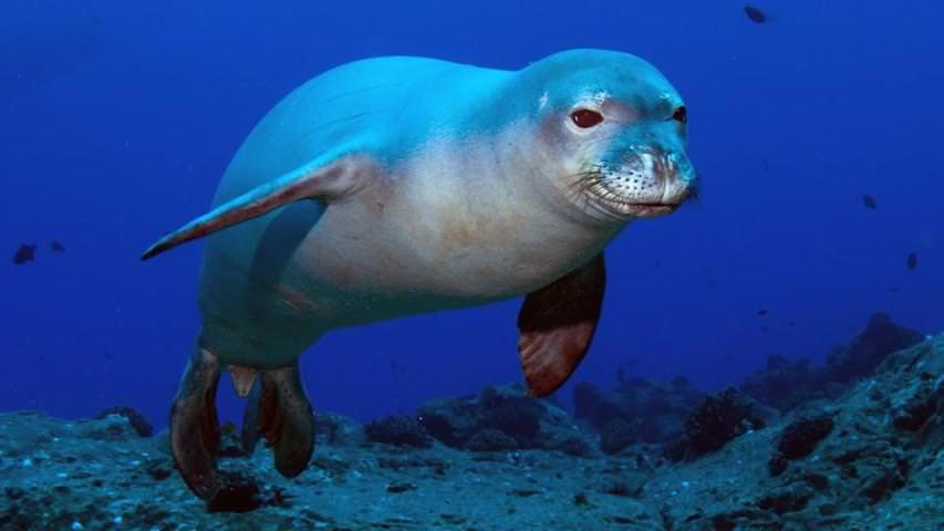 Тюлень подружился с бабочкой ради танцев