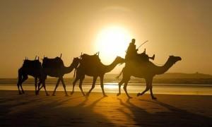 Календарь: 24 сентября - Международный день караванщика