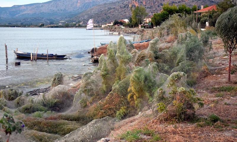 Пауки оплели паутиной греческий город