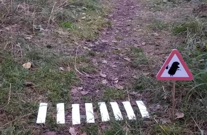 Только для ёжиков: необычный переход появился в новосибирском Академгородке