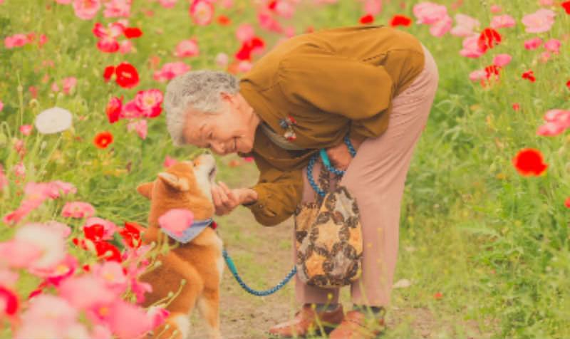 Хозяйка научила пса просить еду по-японски