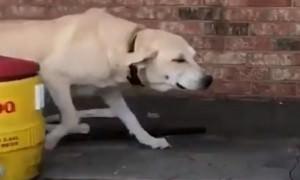 Пса бросили во время урагана