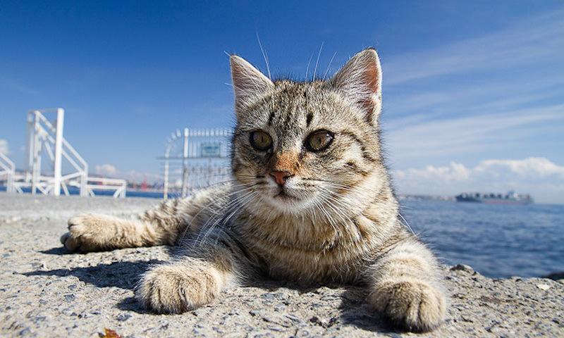Кот стал звездой показа мод в Стамбуле