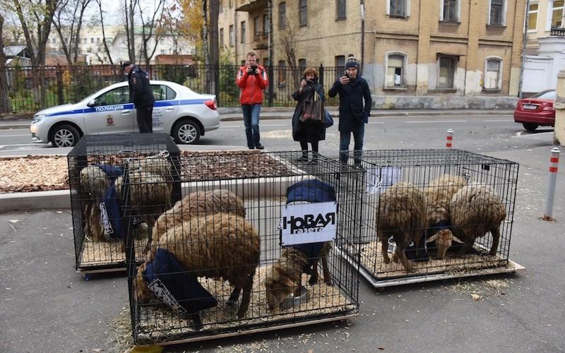«Это бараны, которых не пристыдить»: Роман Носиков высмеял «Новую газету»