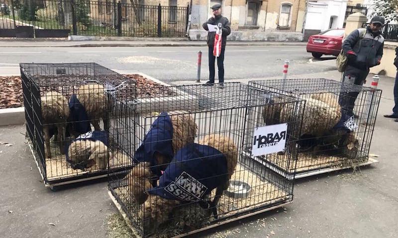 К редакции «Новой газеты» доставили овец в жилетах с надписью «Пресса»