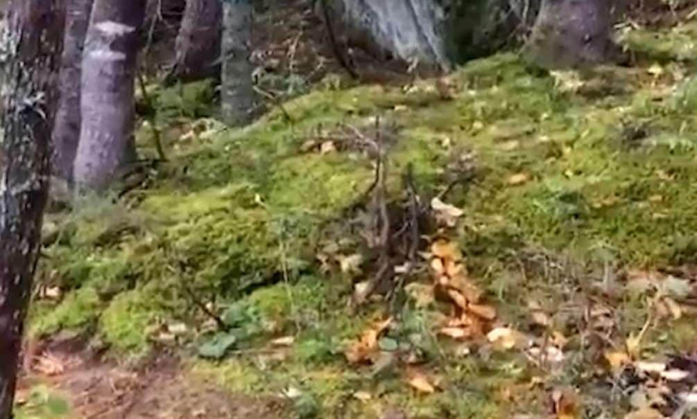 « Дыхание леса »  страшно интересно!