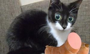 «Докторскую» колбасу проверили на содержание мяса кошек и собак