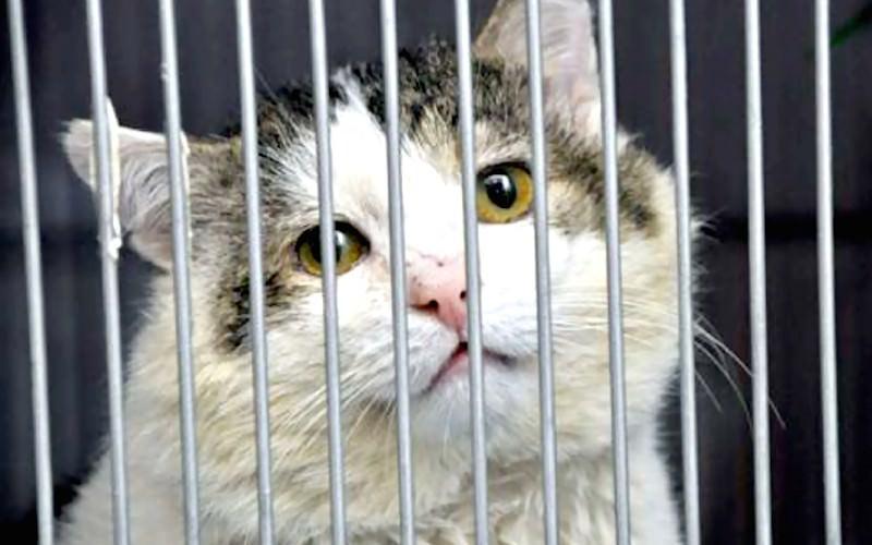 Суд в Барнауле вынес приговор коту-вору