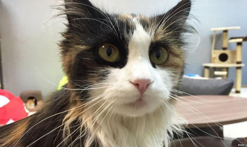 Суд оправдал кота, подозреваемого в краже электричества
