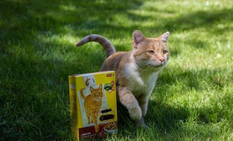 Рыжий кот подарил волгоградке поездку в Канны