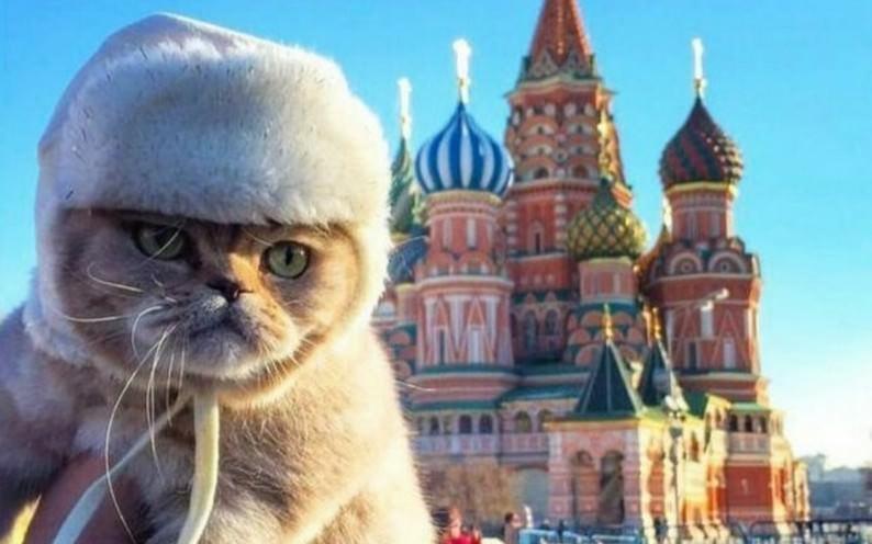 Россия оказалась на первом месте в мире по количеству кошковладельцев