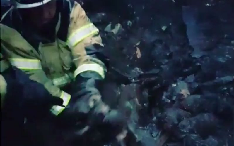 Пожарные спасли восемь новорожденных щенят