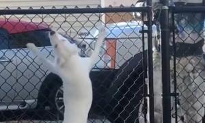 Глухая и слепая собака чувствует возвращение хозяина