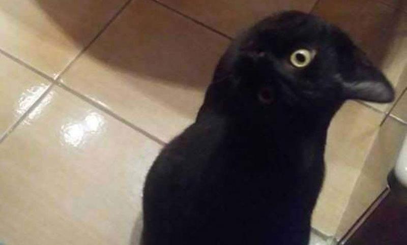 Странная ворона...Очередная иллюзия взбудоражила Сеть
