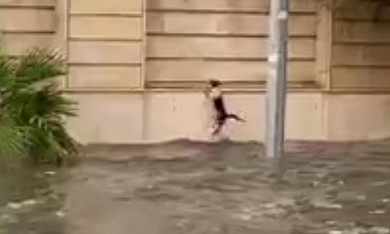 Котейка спасается от наводнения