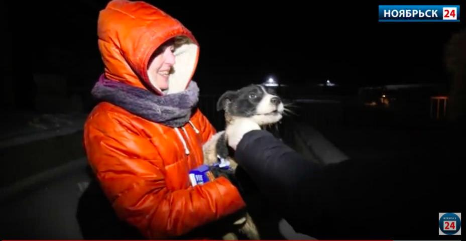 Ради спасения щенка волонтеры и спасатели провели спецоперацию