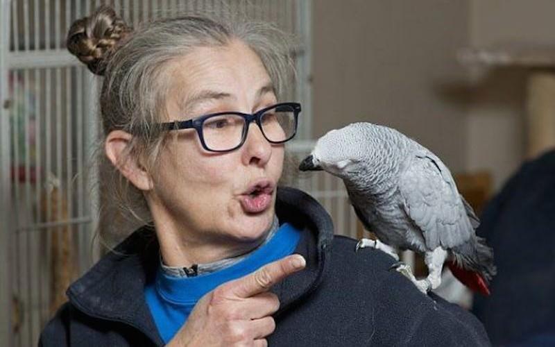 Попугай научился заказывать на Amazon себе клубнику и арбузы