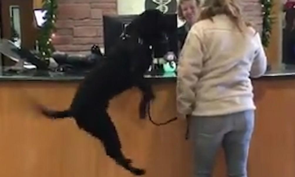 Собаку привели к ветеринару - счастью нет предела!