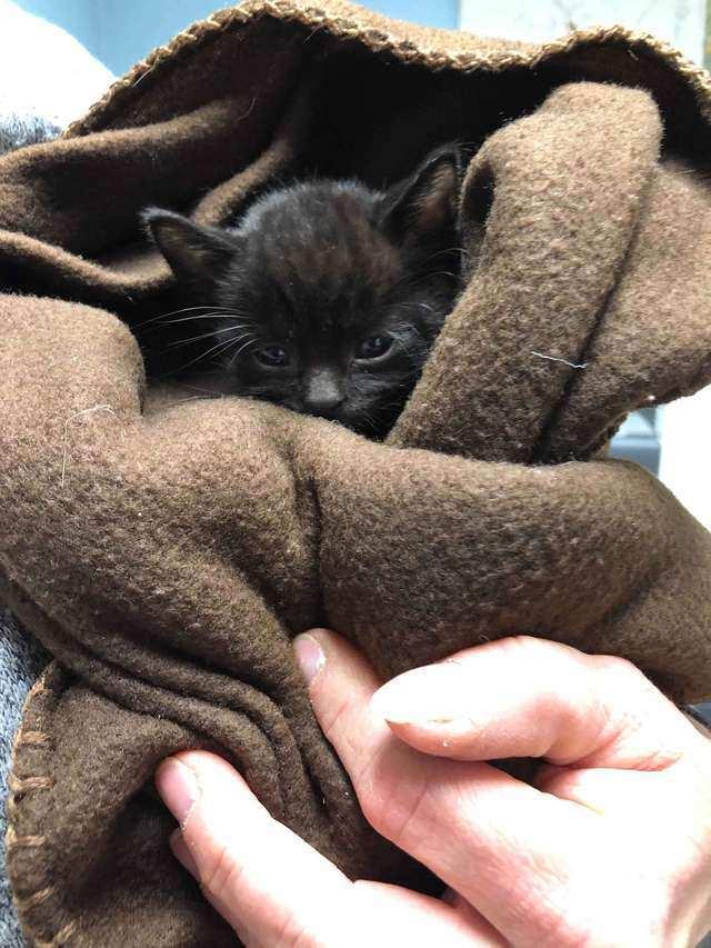 Прохожий спас 12 котят, брошенных на морозе в клетке