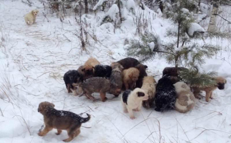 Мужчина нашел в лесу 20 замерзающих щенят